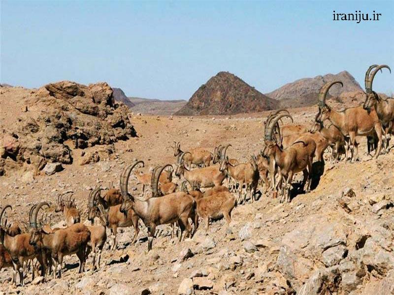 حیات وحش پارک ملی سرخه حصار