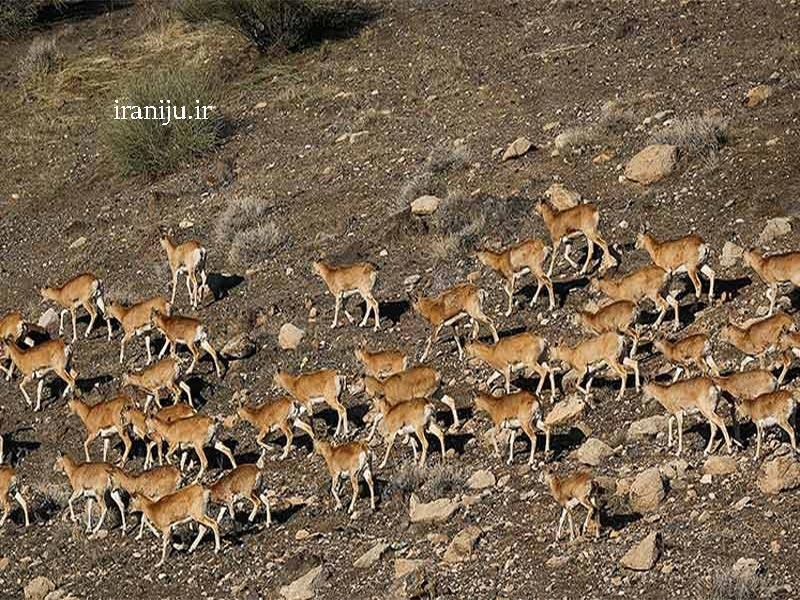 گونه های جانوری پارک ملی سرخه حصار