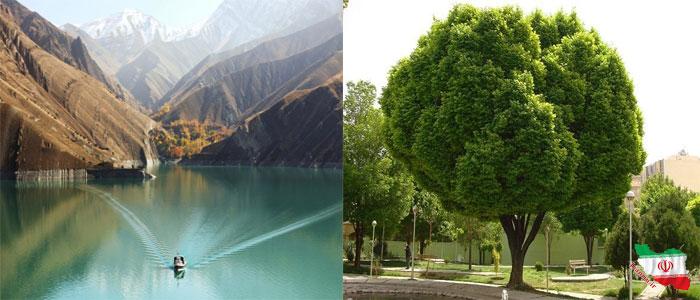 پارک بوستان کمالشهر
